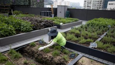 Photo of Tasty Flowers and Apple Trees on Hong Kong's City Rooftop Farms