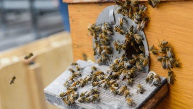 Photo of Three Hives on Office Roof are Home to 150,000 Bees