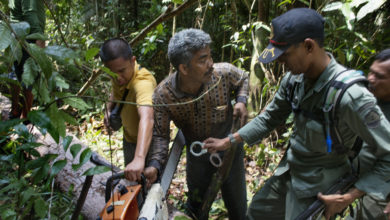 Photo of 143 Million Bucks to Protect Indonesia's Rain Forest and Fight Climate Change