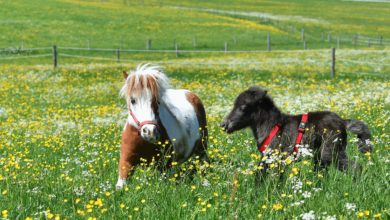 Photo of Happy Ending in Tale about A Baby Pony and A Very Small Horse