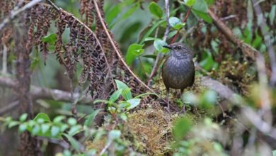 Photo of They Explored Jungle Islands – and Discovered Bird Species We Didn't Know Before