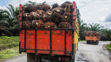 "Photo of ""You Cut Trees, We Do Not Buy From You,"" Food and Drink Giant Tells Palm Oil Producers"
