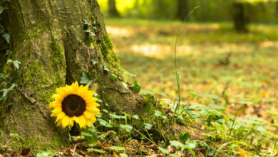 Photo of Want to Turn Into a Tree After You Die? Check These Burial Options…