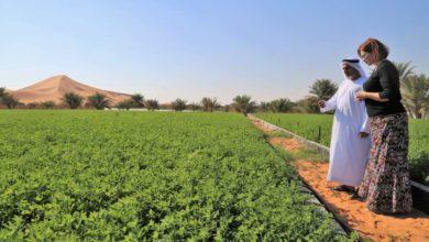 Photo of Veggies from High Tech Farms Help Desert Residents