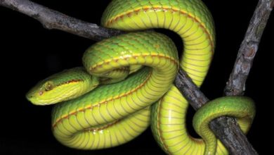 Photo of New Snake Species Found – Named After a Harry Potter Character!