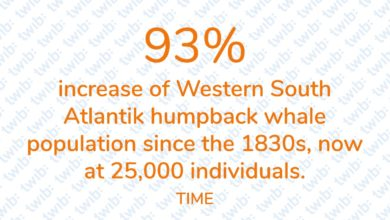 Photo of 93% increase of Western South Atlantik humpback whale population since the 1830s, now at 25,000 individuals.