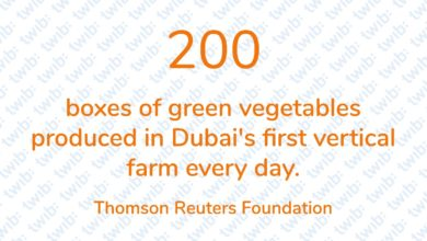 Photo of 200 boxes of green vegetables produced in Dubai's first vertical farm every day.