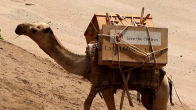 Photo of Corona: Camels (Yes, Camels!) Carry School Books to Children to Keep Them Learning