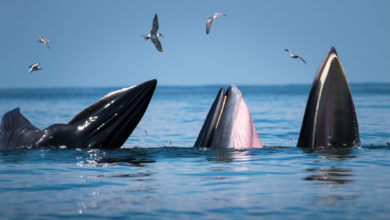 Photo of Fighting Climate Change? Plant Thousands of Trees – or Save One Whale!