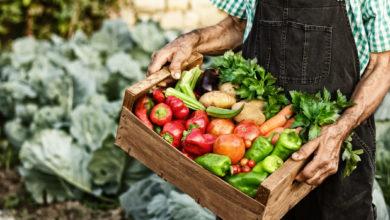 Photo of Organic Farmland Area Continues to Grow Across the Globe