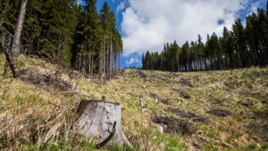 Photo of EU Will Plant 3 Billion Trees to Protect Old Forests