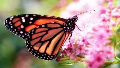 Photo of Owners Can Now Give Some of Their Land to Butterflies