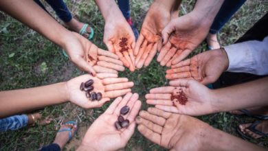 Photo of People in the Amazon Collect Tree Seeds to Help Reforestation – and Make Cash, Too
