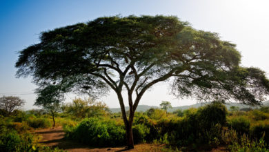 Photo of This African Country Wants to Plant 20 Billion Trees Over the Next Four Years