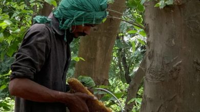 Photo of Tree Planting in This Forest Has Led to a Sweet Surprise: More Honey Production!