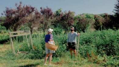 Photo of Fruit Picking Volunteers Rescue Community Farm from Corona-Crash