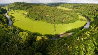 Photo of Wild, Medieval Times Return to Britain's Woodlands. And that's a Good Thing
