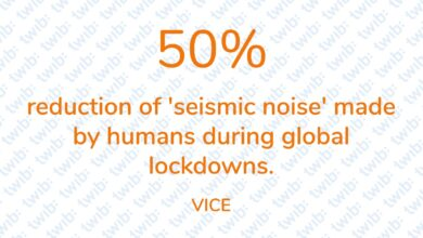 Photo of 50% reduction of 'seismic noise' made by humans during global lockdowns.