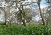Photo of Trees and Shrubs on Farmland? Yes, It's Good for the Crops and for the Planet