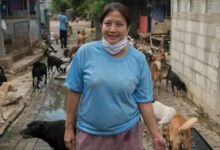Photo of Meet the Woman Who Gave a Sanctuary to More Than 1,000 Stray Dogs