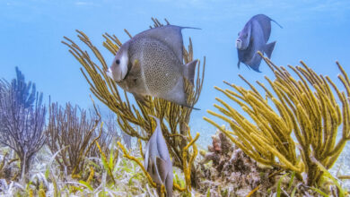 Photo of Belize Protects the Sea, Wants to Revive the Ocean's Ecosystems