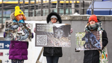 Photo of Hooray for Animals in Poland: No More Fur Farming!