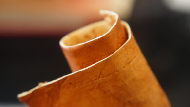 Photo of Mushroom-Made Leather, the New and Sustainable Way to Look Cool