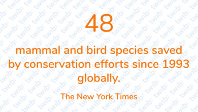 Photo of 48 mammals and bird species saved by conservation efforts since 1993 globally.