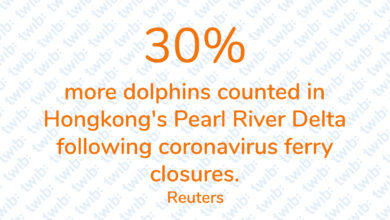 Photo of 30% more dolphins counted in Hongkong's Pearl River Delta following coronavirus ferry closures.