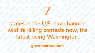 Photo of 7 states in the U.S. have banned wildlife killing contests now, the latest being Washington.