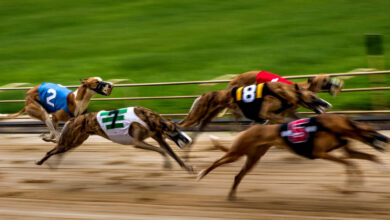 Photo of As Betting Will Be Illegal, Greyhound Racing Is Running Out of Steam