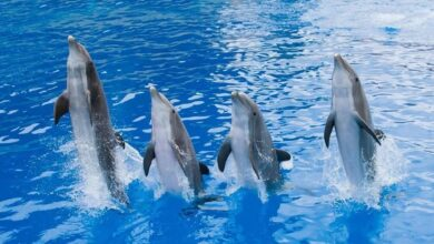 Photo of One More Country Bans Wild Animals in Circuses and Marine Parks