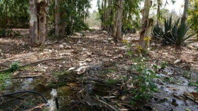 Photo of Egypt Grows Forests in the Desert Using Wastewater