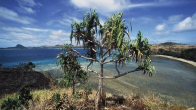 Photo of When the Environment Gets Hot and Hostile, These Plants Might Still Supply Food