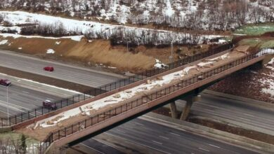 Photo of A Highway-Bridge for Elk, Moose, and Deer – and They Really Use It!