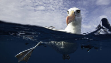 Photo of Big Spy-Birds Find Illegal Fishing Boats
