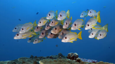 Photo of Fully Protect a Third of the World's Ocean to Benefit… Fishing!
