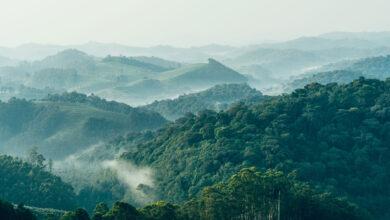 Photo of Satellite Alerts Have Helped Reduce Deforestation
