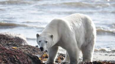 Photo of This Initiative Is Good for the People (and for Polar Bears)